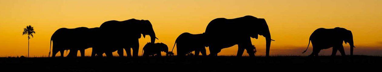 Tuk Tuk Safari Tangalle